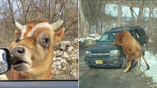 차량을 공격한 소