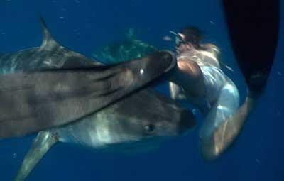 식인 상어의 공격을 피한 남성