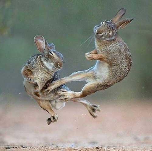 발차기를 날리는 토끼