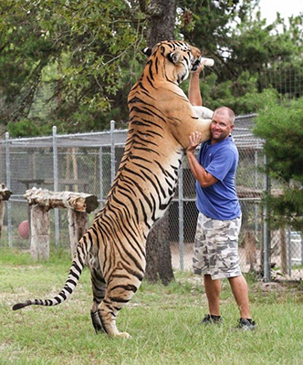 '헉' 소리 나는 호랑이 실물 크기