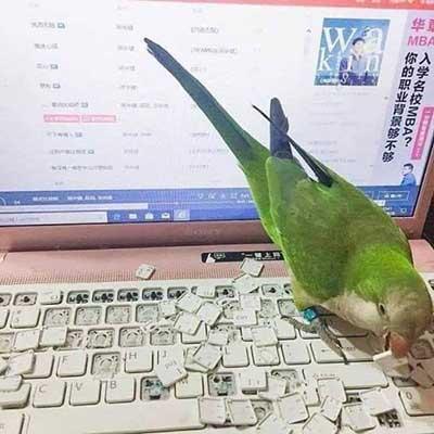 키보드를 박살낸 앵무새