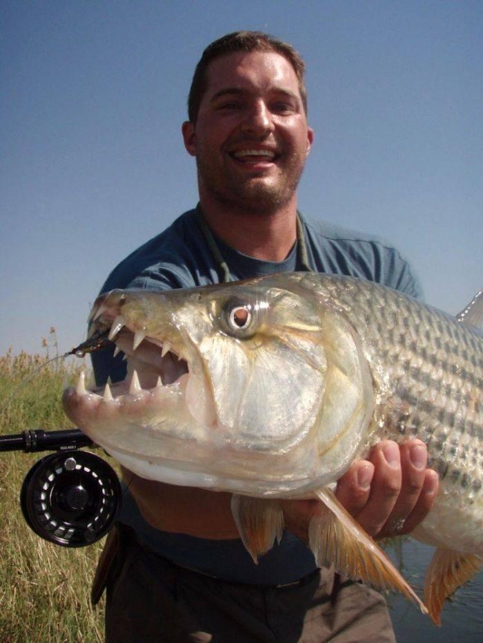 아프리카에서 잡힌 괴물 물고기
