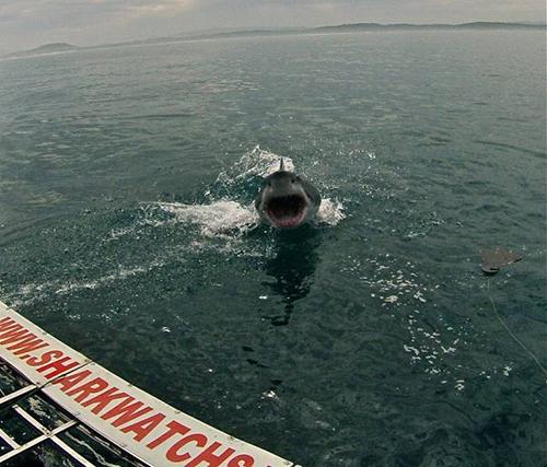 관광객을 위협하는 상어