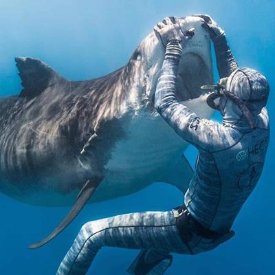 상어와 맞닥뜨린 잠수부