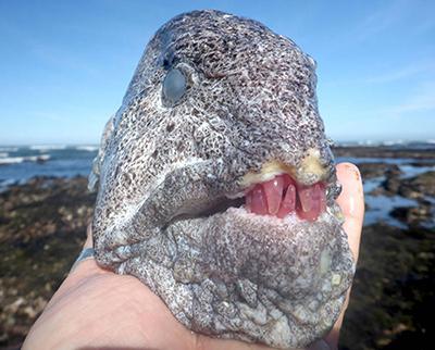 붉은 이빨의 괴물 어류
