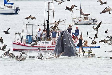 관광객 눈앞에 출몰한 고래