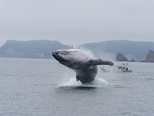 눈 앞에 출몰한 초대형 고래