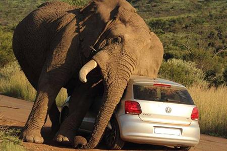 관광객을 덮친 코끼리