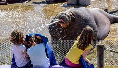 관람객을 공격하는 바다표범