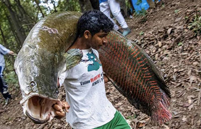5m 육박하는 멸종위기 어류