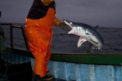 공격적인 상어를 잡은 어부