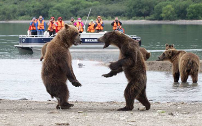 관광객 앞에서 싸우는 곰